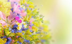 flower-wallpapers-14
